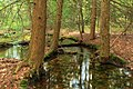 Cherry Run (Headwaters) (2) (8694991274).jpg