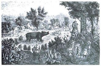 Sumatran rhinoceros - A rhinoceros roaming the ruined city of Chiang Saen, northern Thailand, in 1867