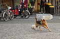 Christianshavn Dog (15325710681).jpg