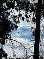 Cielo, nubes y Árbol.jpg