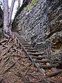 Cinibulkova stezka, mezi Bludištěm a Rovinou (04), žebřík a kořeny.jpg