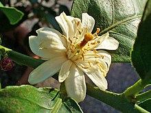 pot de fleur jaune