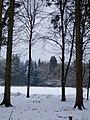 Close to Fancy Rd - January 2013 - panoramio.jpg