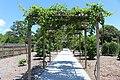 Coastal Georgia Botanical Gardens, grapes on trellis.jpg