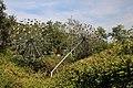Collodi, Parco di Pinocchio, l'albero degli zecchini 03.jpg