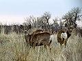 Colorado 2013 (8569926935).jpg
