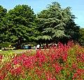 Colourful nature, Manor Park, Sutton, Surrey, London - Flickr - tonymonblat.jpg