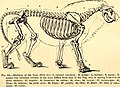 Comparative zoology, structural and systematic - for use in schools and colleges (1883) (20049928993).jpg