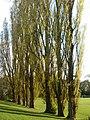 Corby, UK - panoramio.jpg
