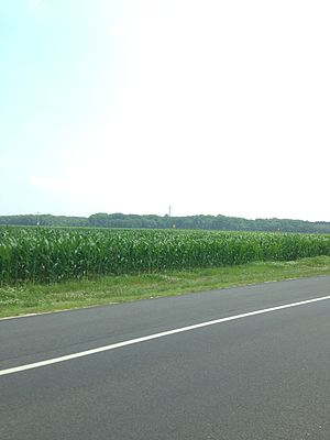 Sussex County, Delaware - Cornfields seen near Lewes