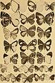 """Correspondenz-blatt des Entomologischen Vereins """"Iris"""" zu Dresden (1884) (20513533229).jpg"""