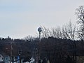 Cottage Grove's Lollipop Water tower - panoramio.jpg