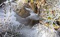 Cradley brook almost frozen over - Flickr - gailhampshire.jpg