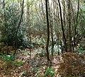 Creech Woods - geograph.org.uk - 1021926.jpg
