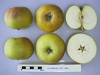 Cross section of Catherine (M27), National Fruit Collection (acc. 1977-095).jpg