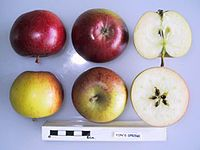 Cross section of Fon's Spring, National Fruit Collection (acc. 1962-065).jpg