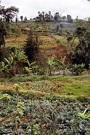 The lower slopes of Mount Kenya are very fertile and the area is heavily cultivated