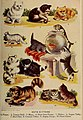 Cute kittens, Webster's new standard dictionary with U. S. census and maps (1911) (14586290520).jpg