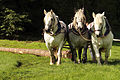 Débardage JEAN BAPTISTE RICARD mondial du cheval percheron 2011Cl J Weber03 (24057406816).jpg