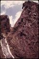 DOUGLAS FIR SEEDLINGS GROWING IN A BURNED CLEAR-CUT AREA OF OLYMPIC NATIONAL TIMBERLAND, WASHINGTON. NEAR OLYMPIC... - NARA - 555084.tif