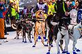 Dag Broch sine hunder ved start (8435474641).jpg