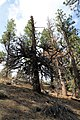 Davis Creek Park - panoramio (33).jpg