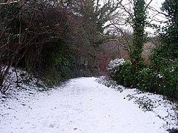 A snowy footpath through a wooded area in Dawsholm Park.