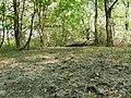 Dead tree in St. Norbert Provincial Park.jpg