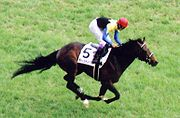 Deep Impact Japanese Derby.jpg