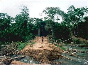 Environmental issues in Brazil - A deforested plot in Brazil