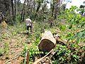 Degradação Florestal Amazônia 30.jpg