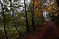 Dene Wood IMG 7026 - panoramio.jpg