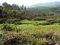 Devikulam Views - panoramio (1).jpg