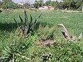 Dinosaurio. - panoramio.jpg