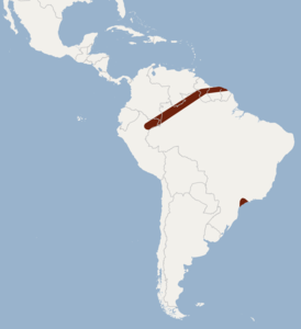 Distribution of Micronycteris brosseti.png