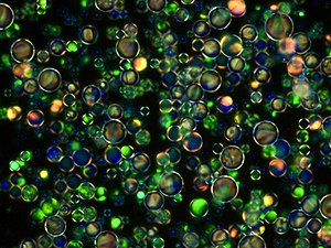 Diverse Blue Phase Liquid Crystal Droplets.jpg