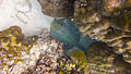Diving Ko Tao, Thailand 1006.jpg
