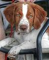 Dog head (8130163810) (2).jpg
