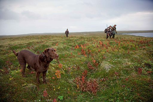 Dog winth hunters hunting