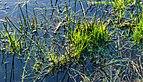 Door langdurige regen ondergelopen grasland. Locatie, Natuurterrein De Famberhorst 02.jpg