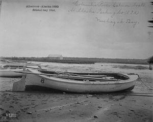 Alaska Packers' Association - Salmon boats at APA cannery, Nushagak Bay, 1900
