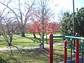 Downtown, Naperville, IL 60540, USA - panoramio (4).jpg