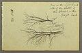 Drawing, Trees by Htakie (.) Pond, 1845 (CH 18203833).jpg