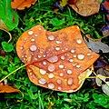 Drops - Flickr - Stiller Beobachter.jpg
