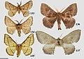 Druenticinae (10.3897-zookeys.815.27335) Figures 133–137.jpg