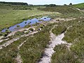 Duck Hole Bog, New Forest - geograph.org.uk - 191273.jpg