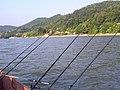 Dunav iz Valjeva - panoramio (10).jpg