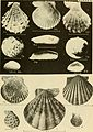 East coast marine shells - descriptions of shore mollusks together with many living below tide mark, from Maine to Texas inclusive, especially Florida, with more than one thousand drawings and (20943580308).jpg