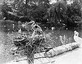 Een reiger op zijn nest, Bestanddeelnr 252-1415.jpg