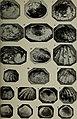 Eesti Looduseuurijate Seltsi aastaraamat (1912) (20994110889).jpg